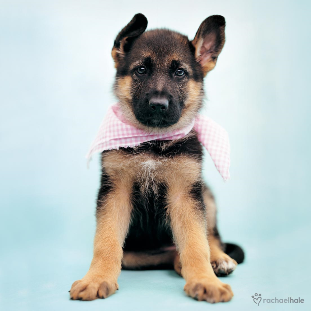 Puppy With Pink Neckerchief Cute Greeting Card
