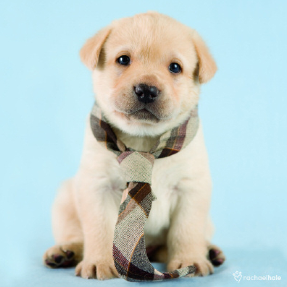 Puppy With Neck Tie Cute Greeting Card