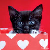 Kitten In Red Box Cute Greeting Card