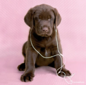 Puppy With Earphones Cute Greeting Card