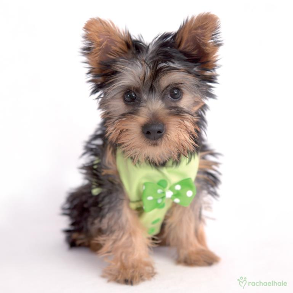Puppy With Green Bow Tie Cute Greeting Card