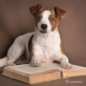 Puppy Reading Book Cute Greeting Card