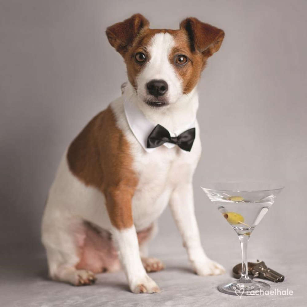 Puppy With Martini Drink Cute Greeting Card