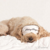 Puppy With Eye Mask Cute Greeting Card