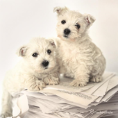 Puppies Sitting On Pages Cute Greeting Card