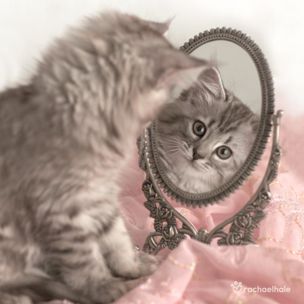 Kitten Looking In Mirror Cute Greeting Card