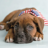 Puppy & Flag Cute Greeting Card