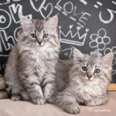 Kittens And Blackboard Cute Greeting Card