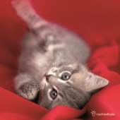 Kitten On Red Cushion Cute Greeting Card