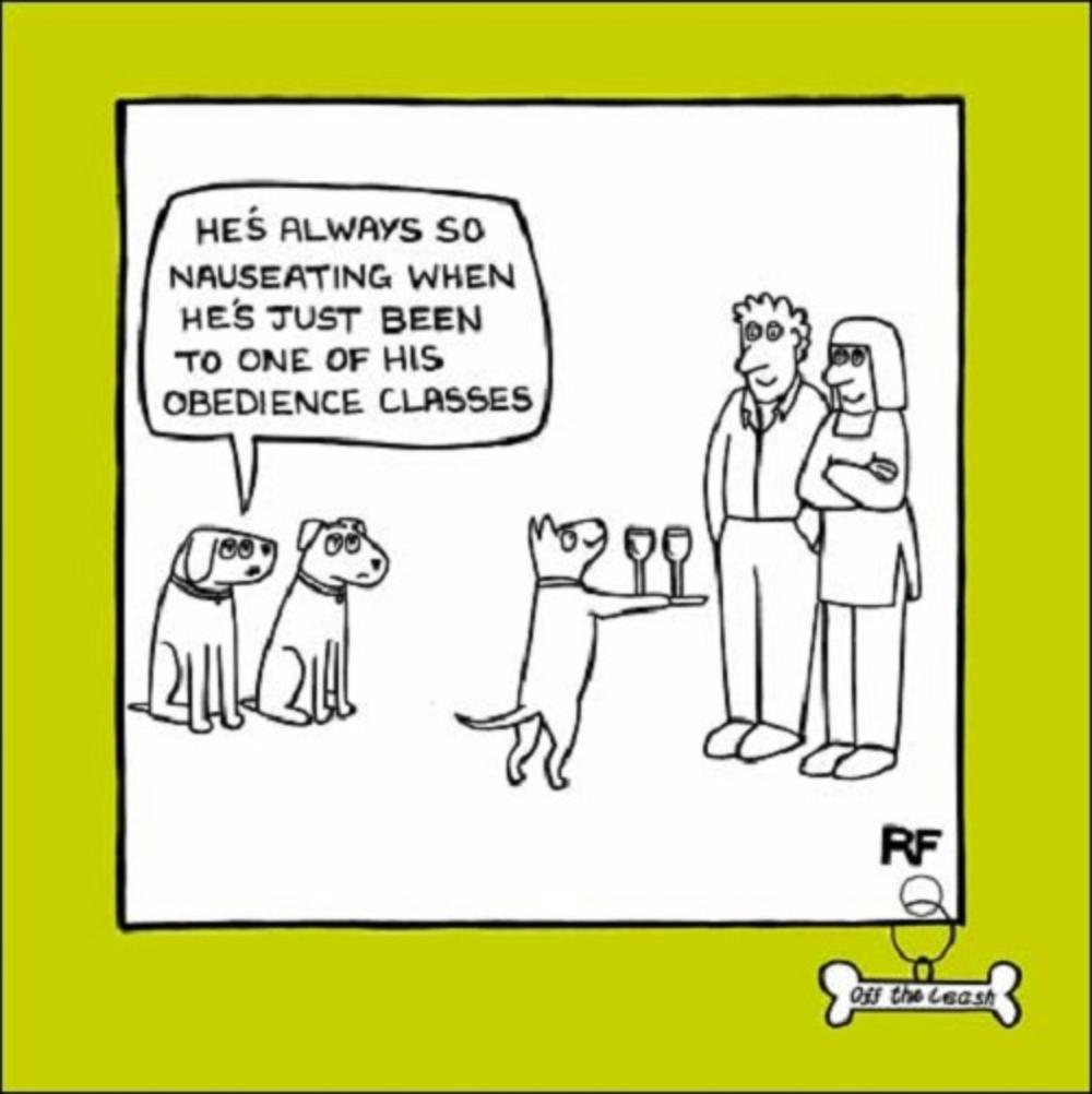 Obedience Classes Cartoon Dog Humour Greeting Card