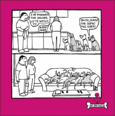 Quick, Guys The Sofa Cartoon Dog Humour Greeting Card