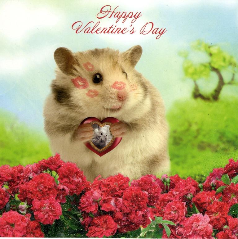 Cute Hamster Happy Valentines Day Card Cards – Hamster Valentine Cards