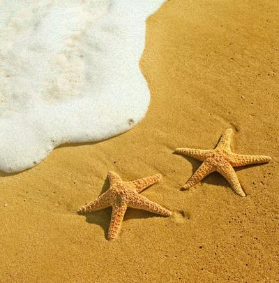 Simple Starfish On A Beach Valentine's Day Card Greetings Card