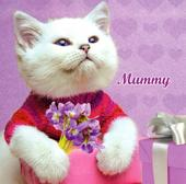 Mummy Cat Mother's Day Flittered Card