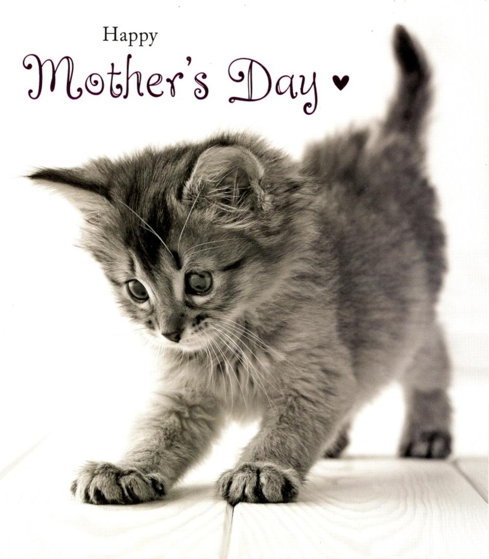 Cute Kitten Happy Mothers Day Card