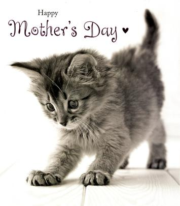 Cute Kitten Happy Mother's Day Card