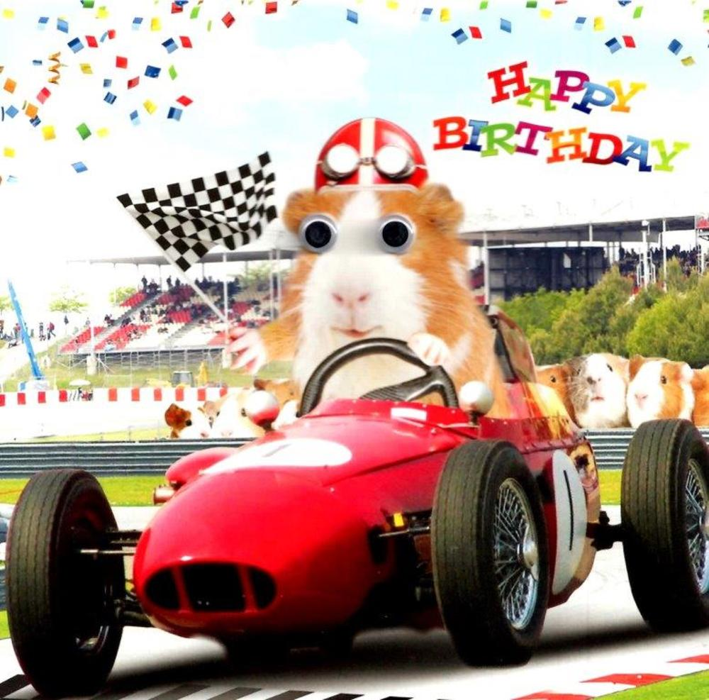 Racing Guinea Pigs Googlies Birthday Card