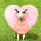 Pink Sheep Googlies Greeting Card Blank Inside