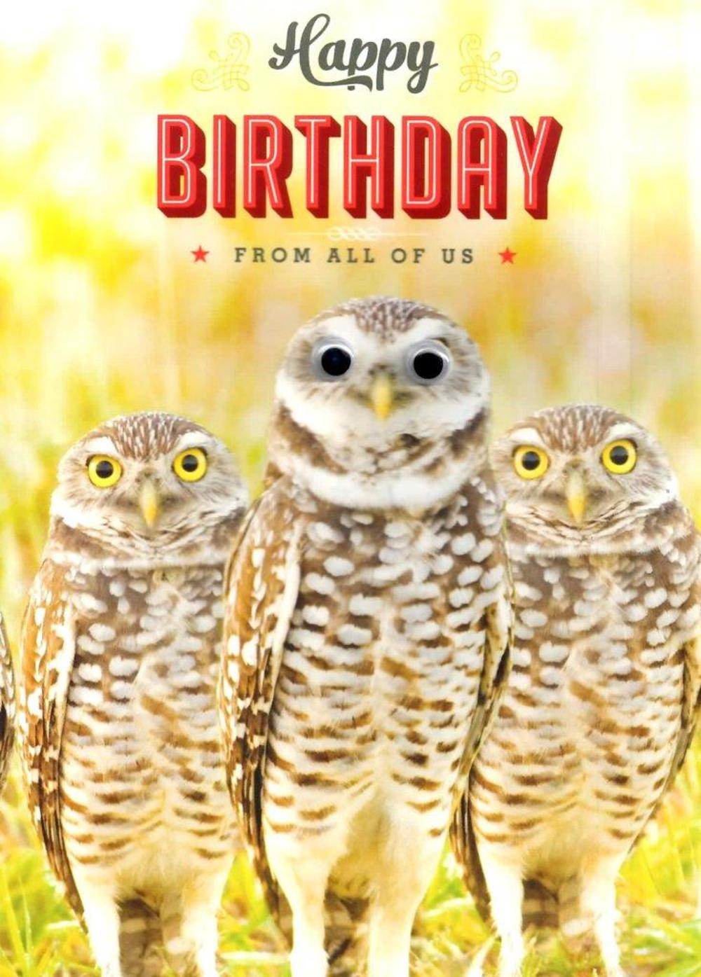 Owls Googlies Happy Birthday Card