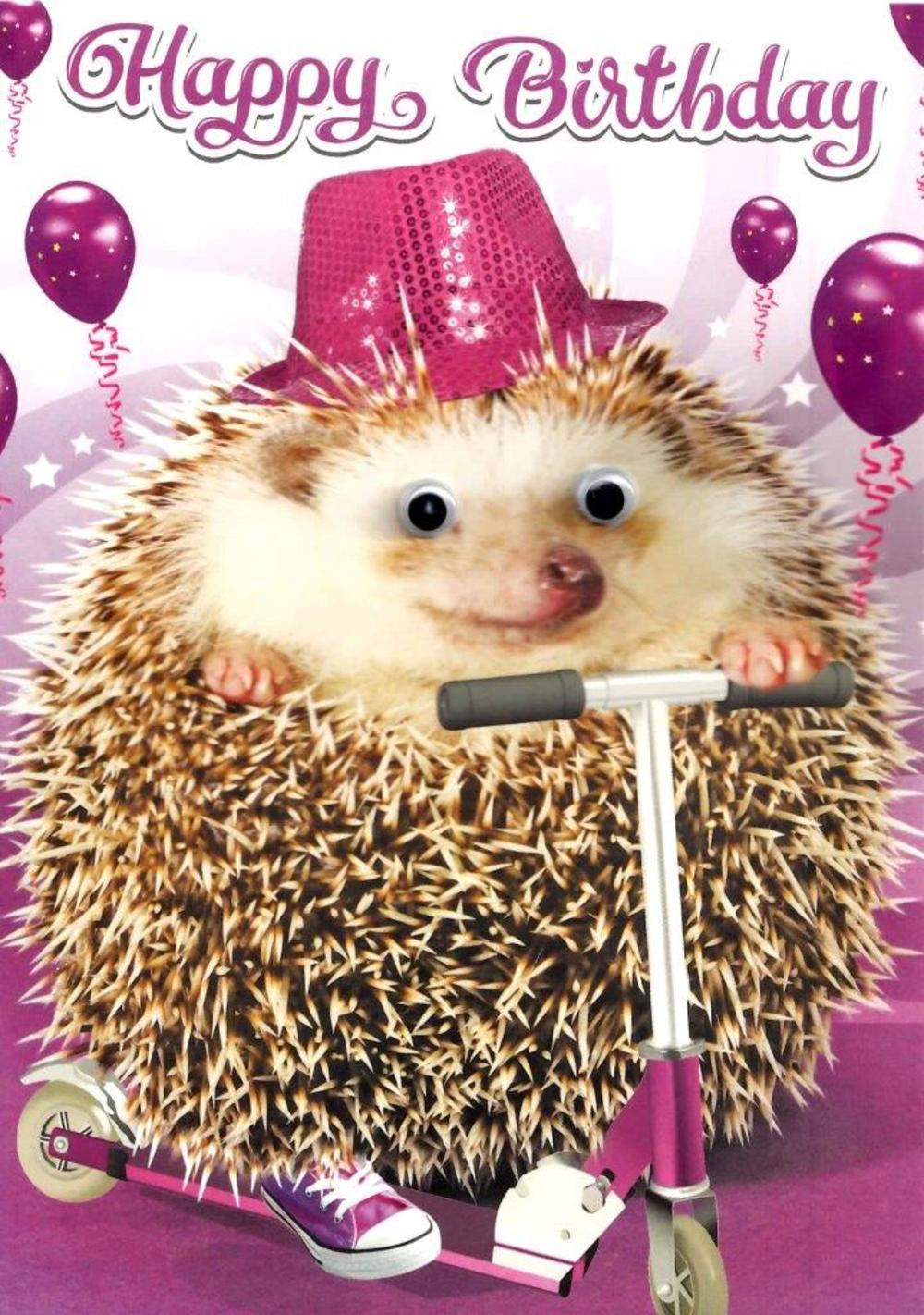 Scooting Hedgehog Googlies Birthday Card