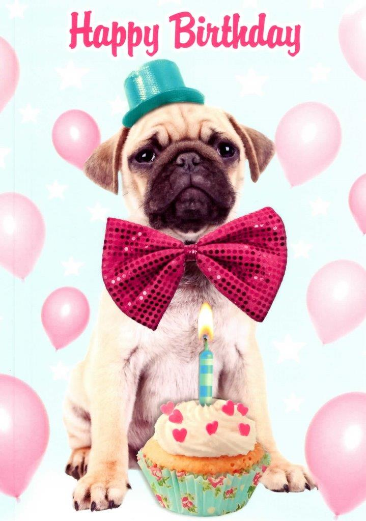 Details About Pug Dog Happy Birthday Greeting Card Fun Tracks Greetings Cards