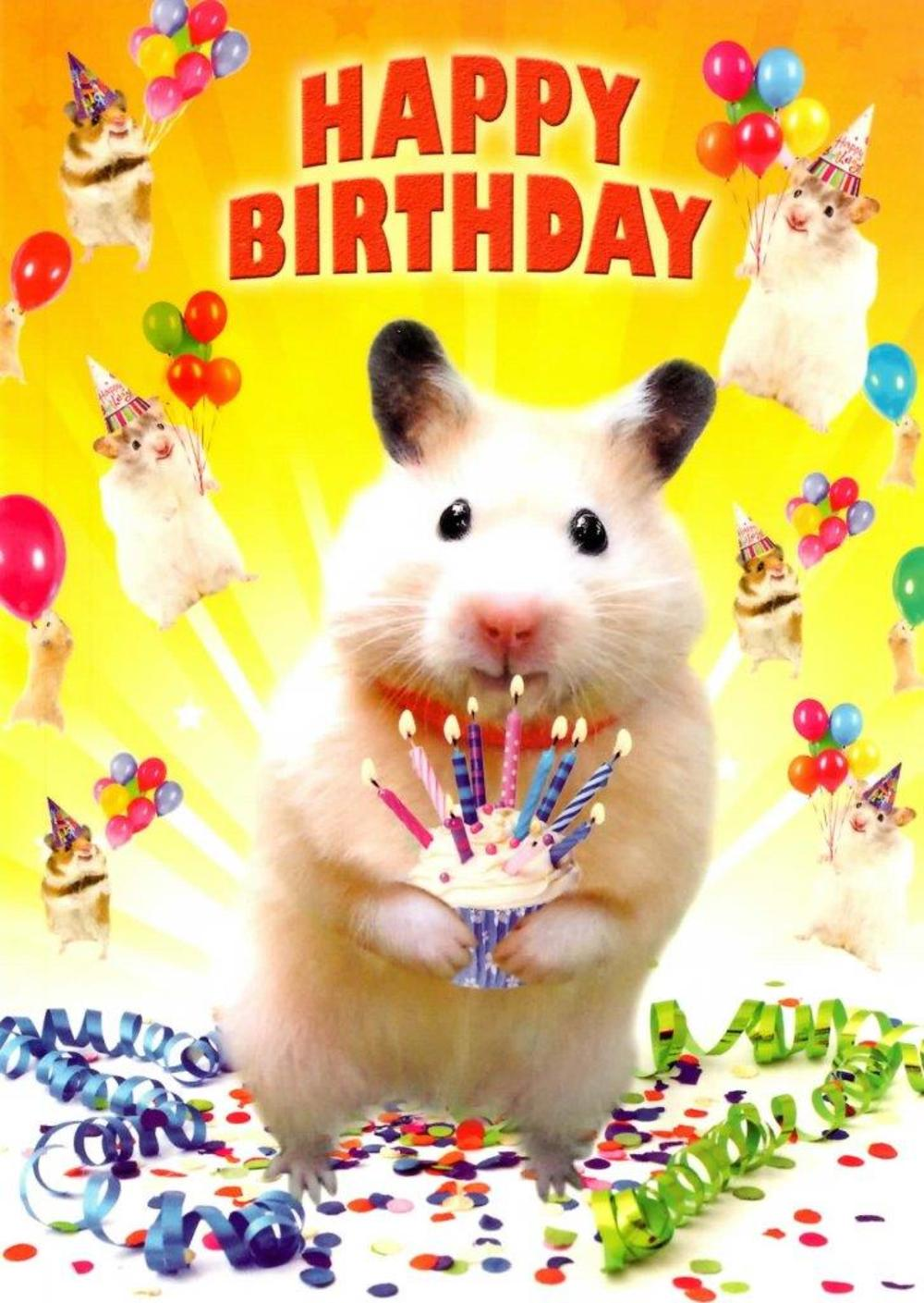 Image result for happy birthday hamster pix