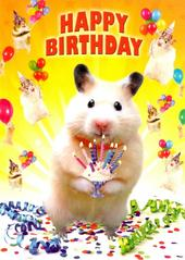 Hamster Happy Birthday Greeting Card