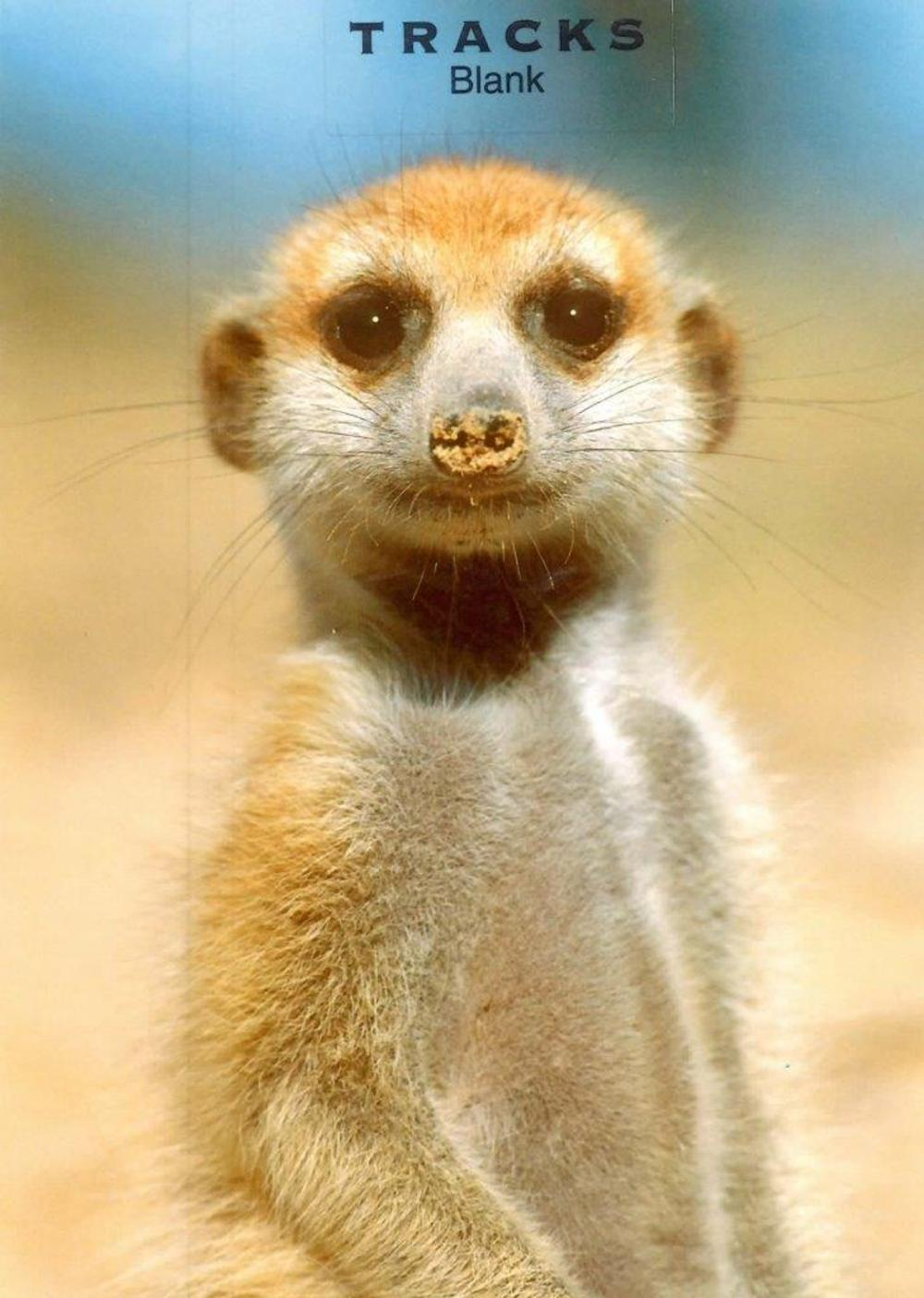 Meerkat Blank Photo Greeting Card