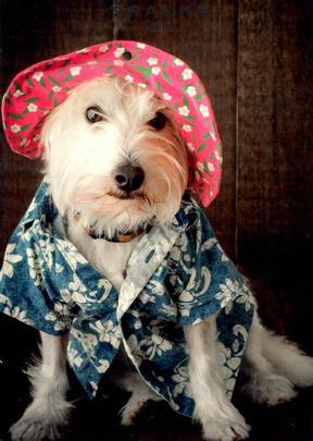Summer Westie Dog Blank Greeting Card