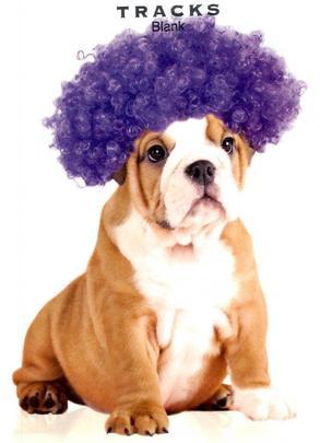 Bulldog In Wig Blank Greeting Card