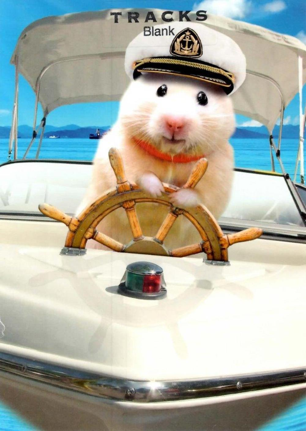 Captain Hamster Blank Greeting Card