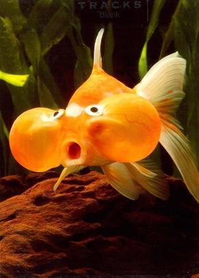 Bubble Eye Fish Blank Photo Greeting Card