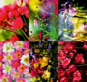 Assorted Pack of 6 Floral Birthday Greeting Cards