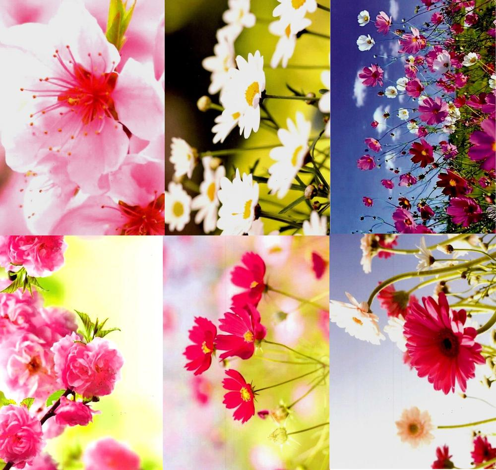 Assorted Pack of 6 Floral Blank Greeting Cards