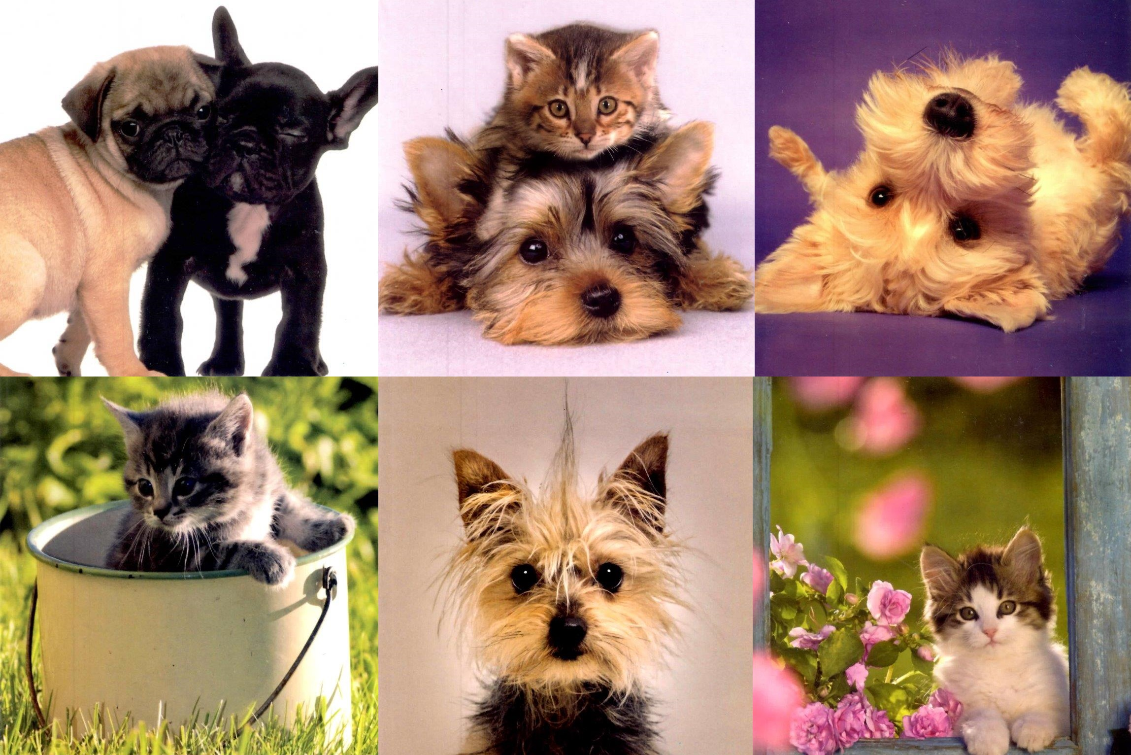 Assorted pack of 6 dog cat blank greeting cards cards love kates assorted pack of 6 dog cat blank greeting cards kristyandbryce Image collections