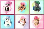 Assorted Pack of 6 Cats & Dogs Birthday Cards