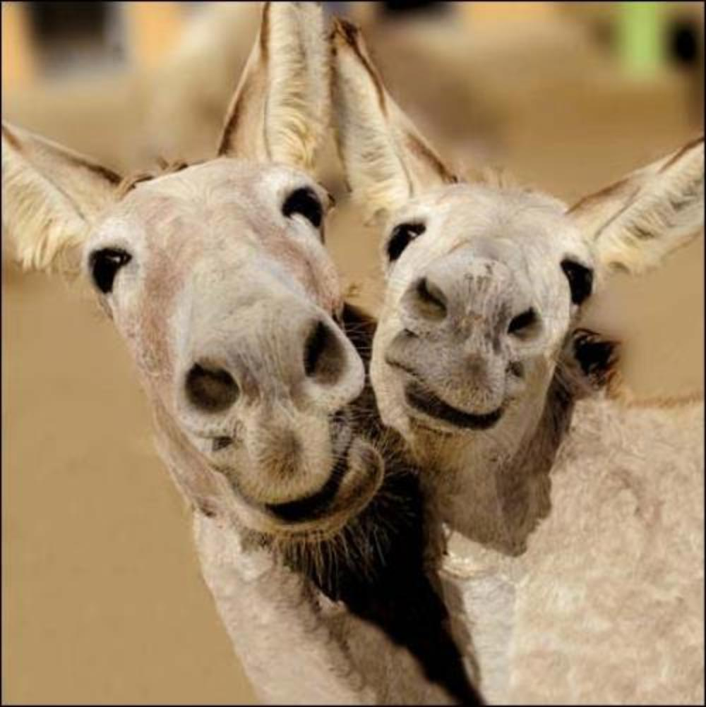 Comedy Duo Donkeys Framed Photo Art Greeting Card