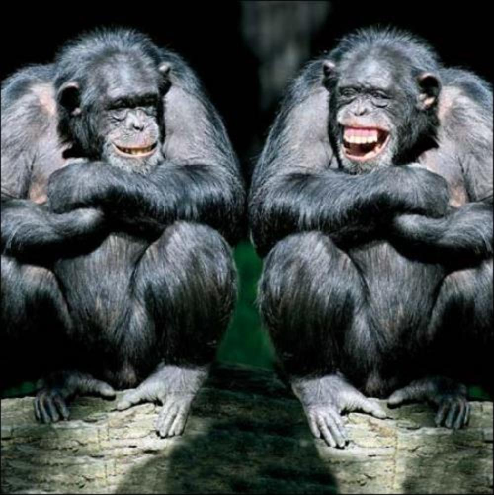 A Right Old Laugh Monkey Photo Art Greeting Card