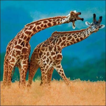 And Slide Giraffes Photo Art Greeting Card
