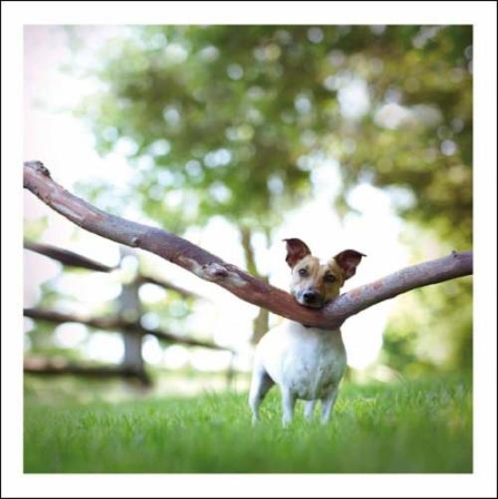 Oakley The Strongman Loose Leashes Greeting Card