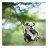 Buster The Pushover Loose Leashes Greeting Card