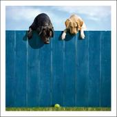 Lewie & Clark Out Of The Park Loose Leashes Greeting Card