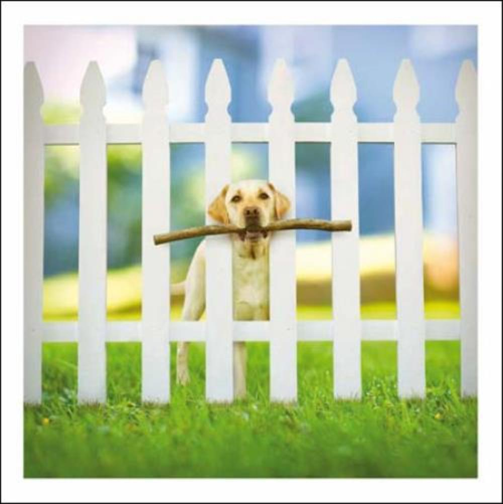 Sherlock The Sleuth Loose Leashes Greeting Card