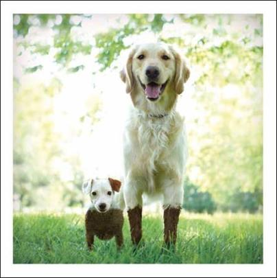 Mud & Muck The Dirty Duo Loose Leashes Greeting Card