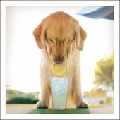 Twist The Overachiever Loose Leashes Greeting Card
