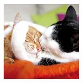 Bliss! Cat Cuddles Cattitude Greeting Card