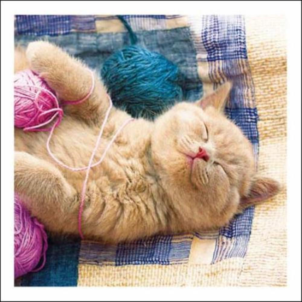 Tickled Pink Cat & Wool Cattitude Greeting Card