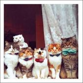 Party Time! Cats Cattitude Greeting Card