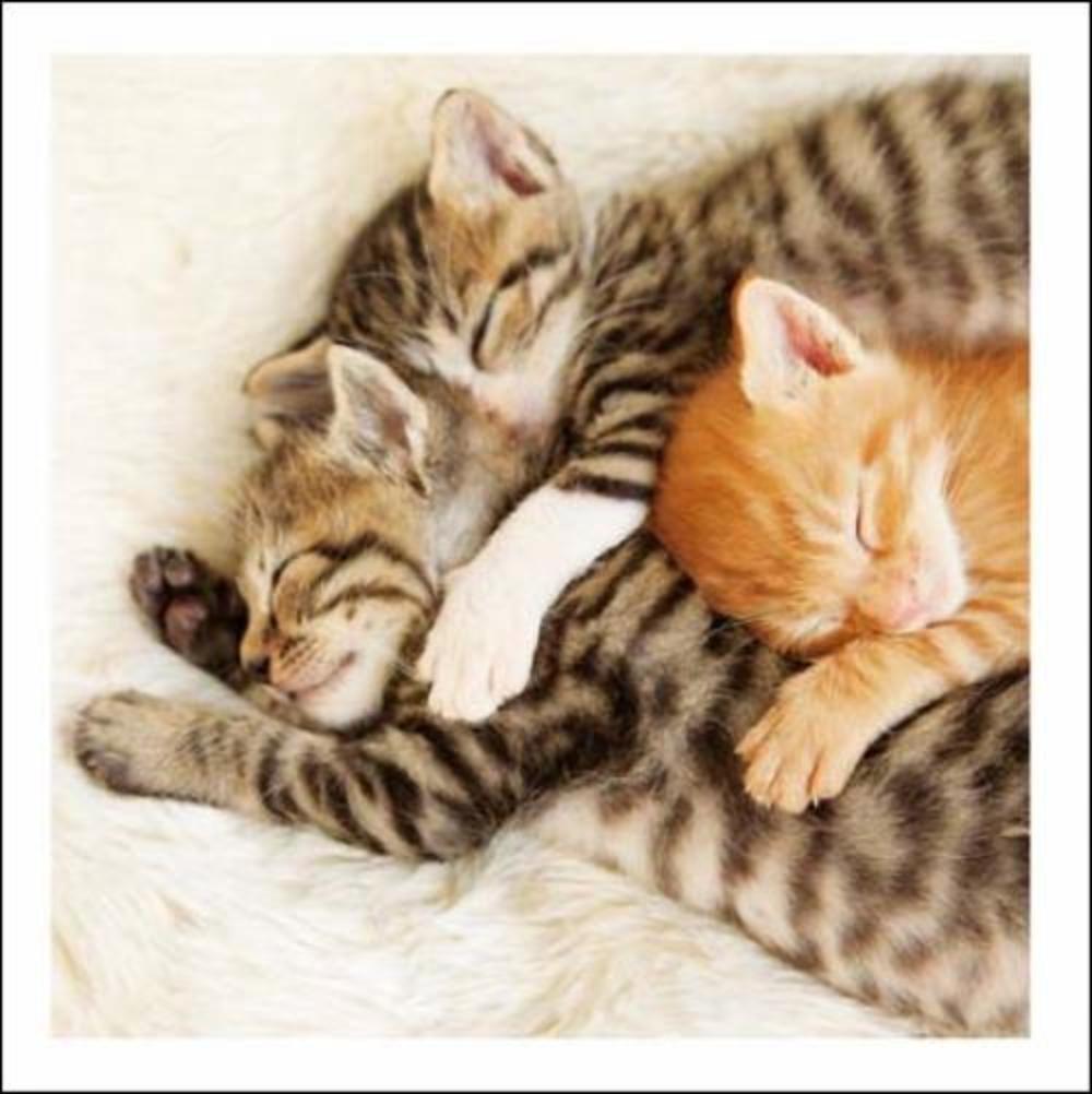 Better Together Cat Cuddles Cattitude Greeting Card
