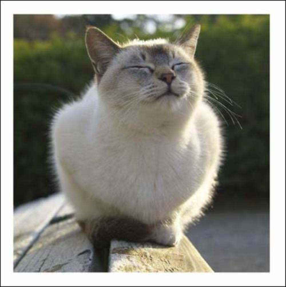 Happy As Larry Cat Cattitude Greeting Card